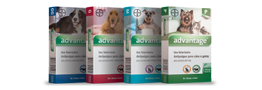 Advantage Cães e Gatos